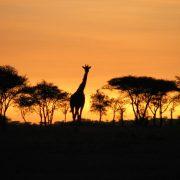 safari-tanzania-01