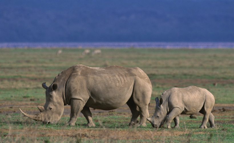 safari-tanzania01