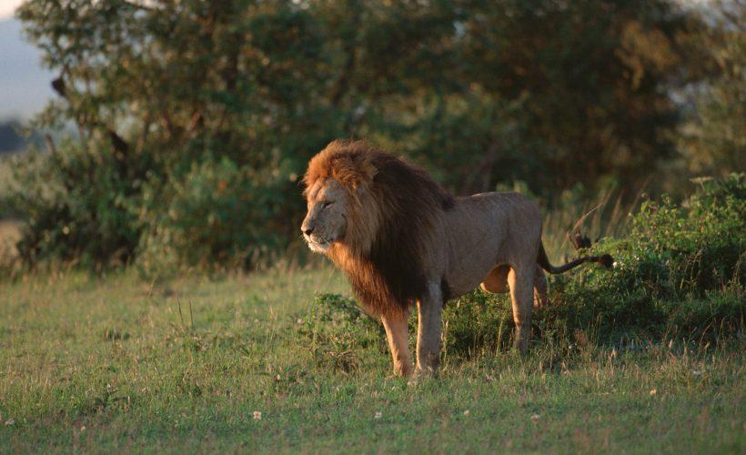 safari-tanzania02