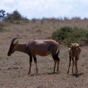 safari-tanzania03