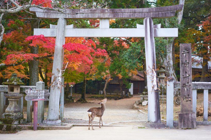 Japao-Nara